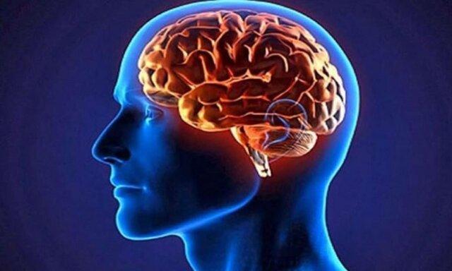 مغز، کلسترول و امگا 3 را دوست دارد